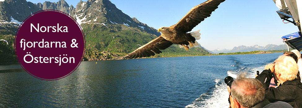 Norska fjordarna