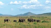 Kenyasafari - Amboseli, Nakuru, Masai Mara - 6 dagar