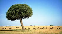 Kenyasafari - Nakuru, Masai Mara Safari - 4 dagar